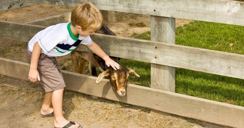 Petting Zoos in Ohio