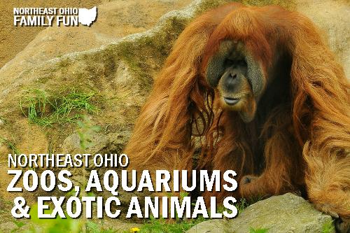 Zoos Aquariums Exotic Animals in Northeast Ohio