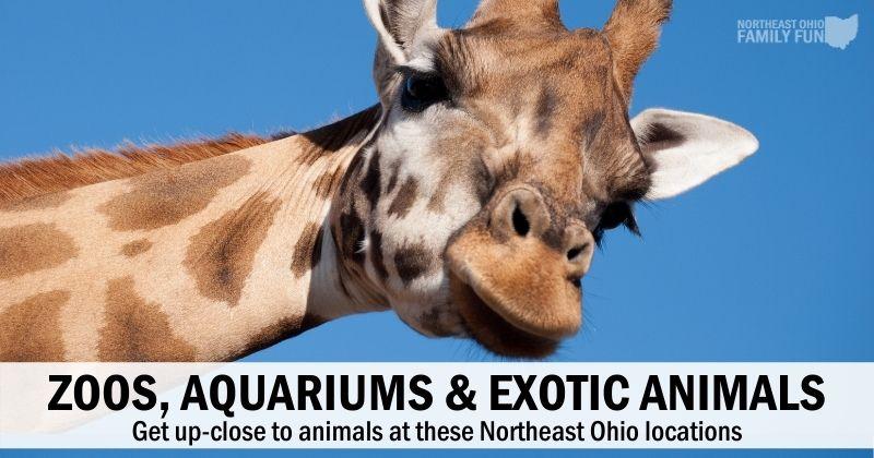 Zoos, Aquariums & Exotic Animals