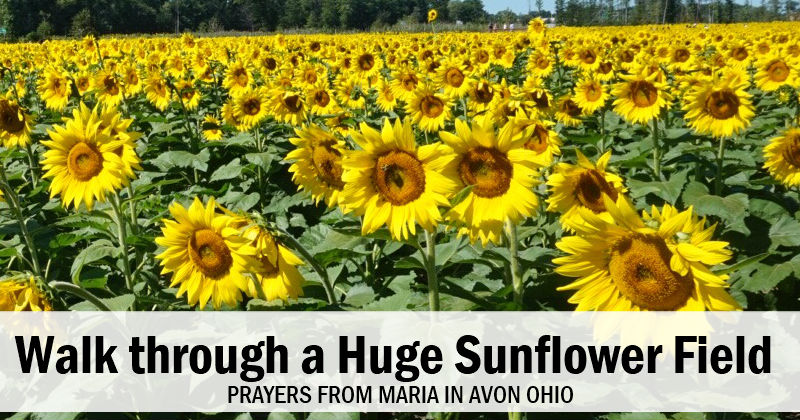 Prayers from Maria Sunflower Field Avon Ohio