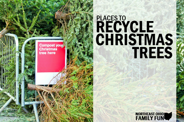 Where to Recycle Christmas Trees