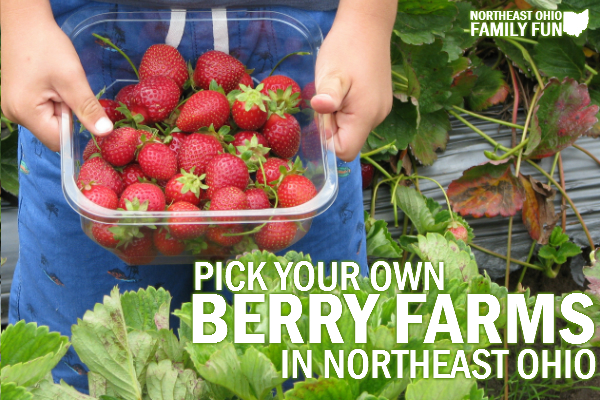 Pick Your Own Berries in Northeast Ohio