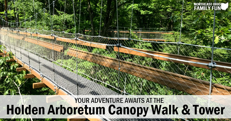 Explore the Holden Arboretum – Canopy Walk, Tower, Nature Play Area & More!