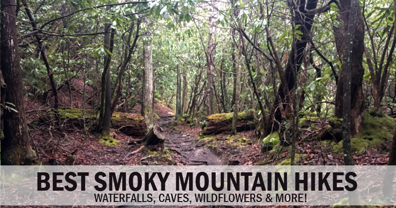 Best Smoky Mountains Hiking – Waterfalls, Caves, Wildflowers & more!