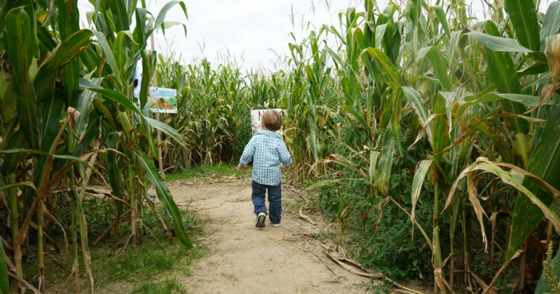 Mapleside Farm - Corn Maze