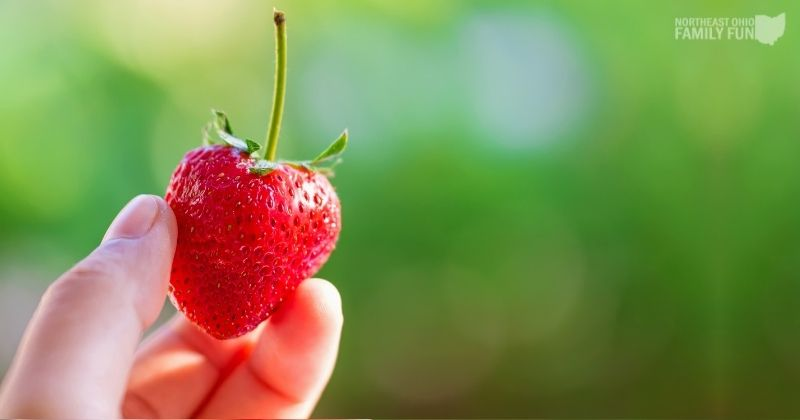 20+ Local Farms with the Best Strawberry Picking in Northeast Ohio