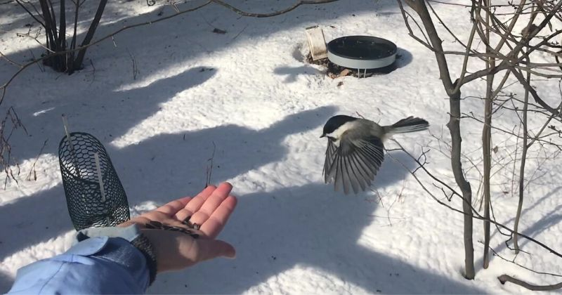 Handfeed Chickadees at Cleveland Metroparks (2)