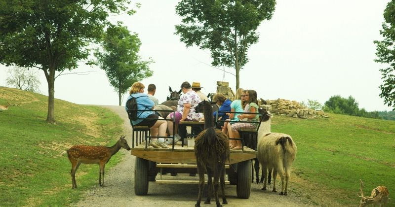 Things to Do in Amish Country Ohio, The Farm at Walnut Creek