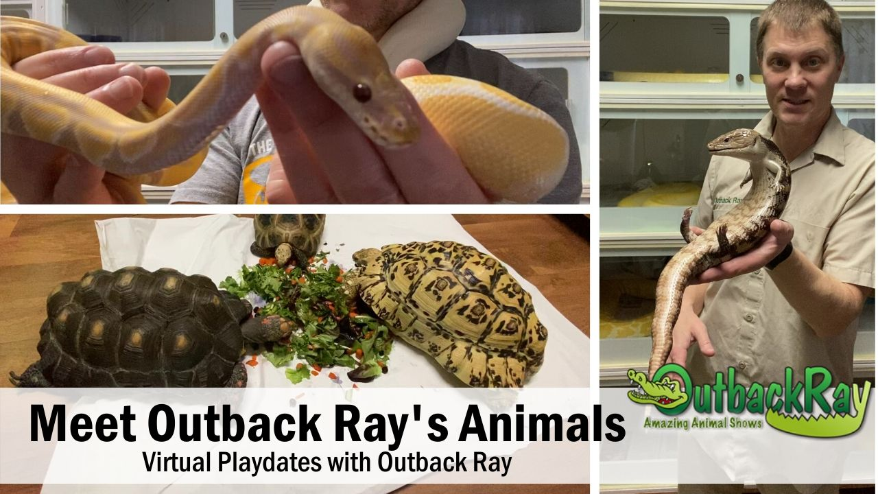 Meet Outback Ray's Amazing Animals