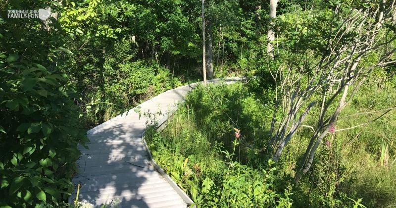 The Jackson Bog State Nature Preserve – Wooded Trails & Scenic Boardwalk