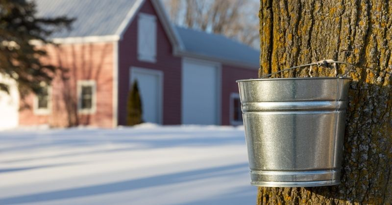 Deliciously Sweet Maple Syrup Festivals in Northeast Ohio {2021}