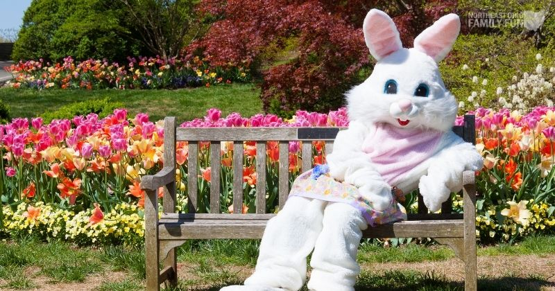 Best Places to Get Easter Bunny Pictures Across Northeast Ohio