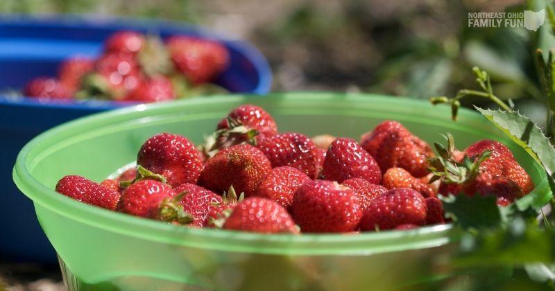 Best Things to do in June in Ohio – Strawberries, Movies, Getaways & More
